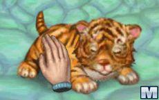 My Baby Tiger